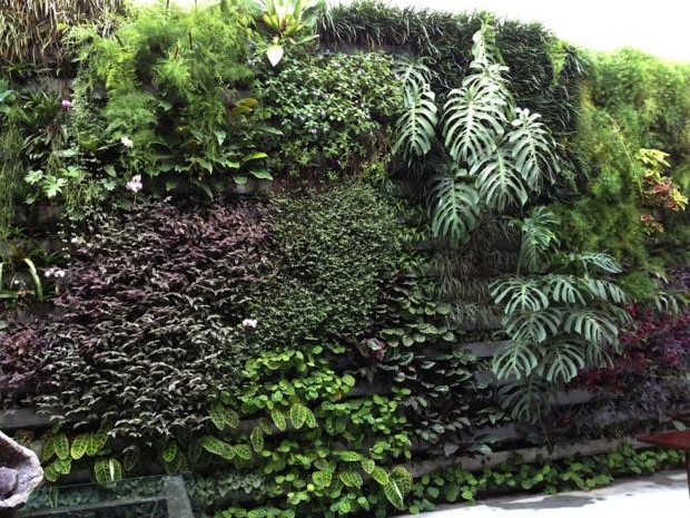 jardim vertical loja teo_620x465