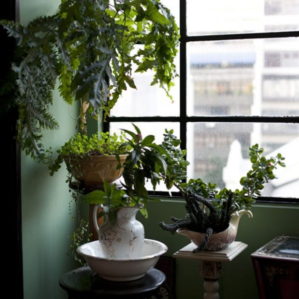 Detalhe das plantas em jarra e vasos dispostas na sala de jantar.