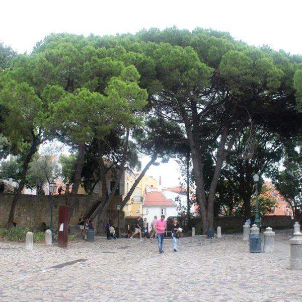 As árvore são lindas e imponentes