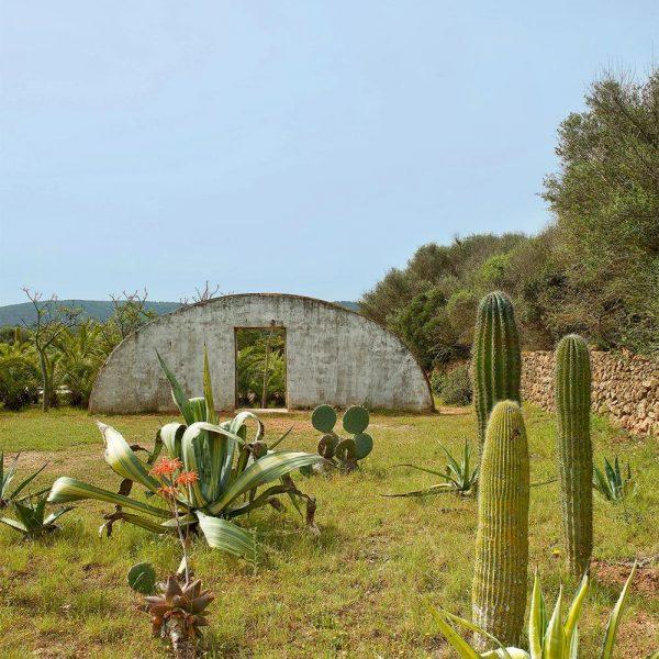 O jardim, com muitos cactos e palmeiras