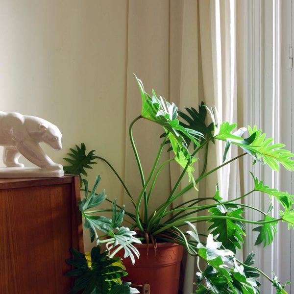 Outra paixão dos donos da casa, as plantas estão em todos os espaços