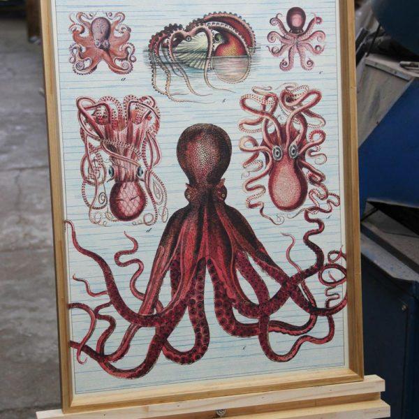 "Gravura ""Octopods"""