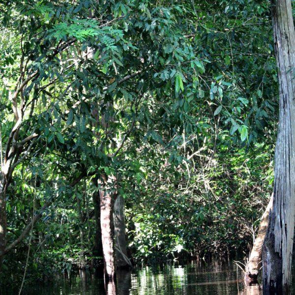 Igapó, a floresta alagada