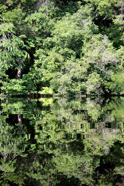 A mata refletida no rio