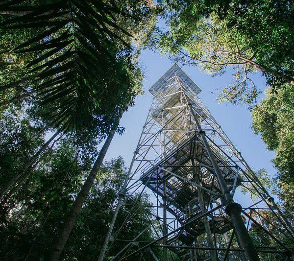 Ela, a torre
