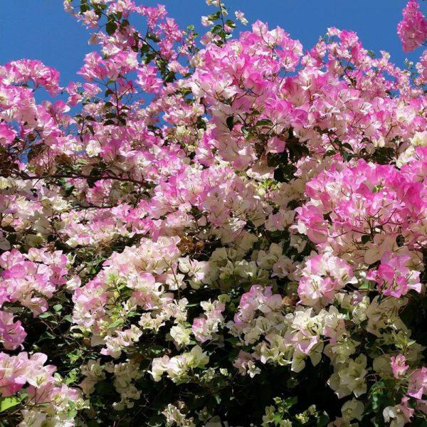 primavera (Copy)